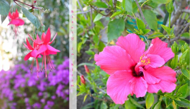 Garden1F