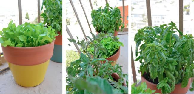 Plant3-1F